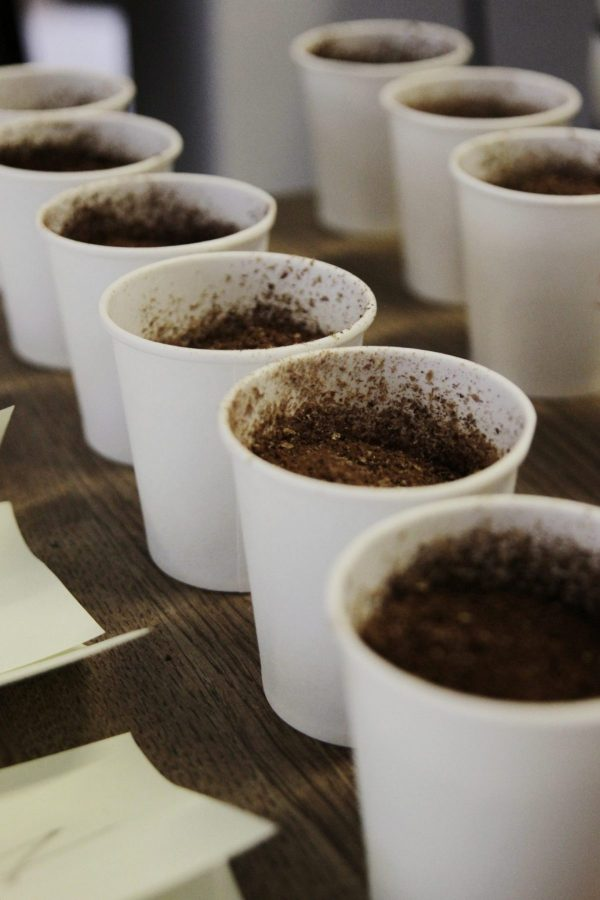 kawa - coffee plant - cupping
